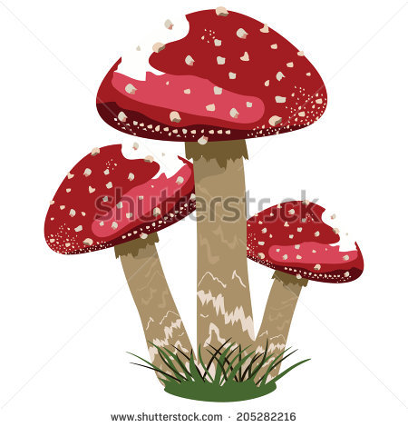 Basidiomycota Stock Vectors & Vector Clip Art.