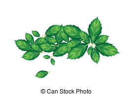 Sweet basil Vector Clip Art Illustrations. 182 Sweet basil clipart.