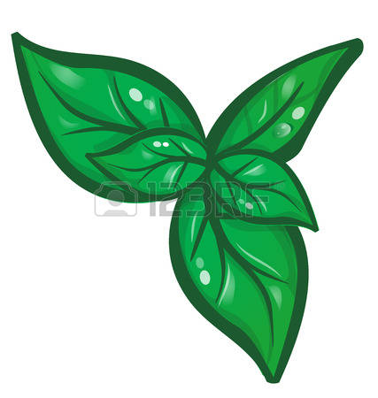 2,328 Basil Leaf Stock Vector Illustration And Royalty Free Basil.