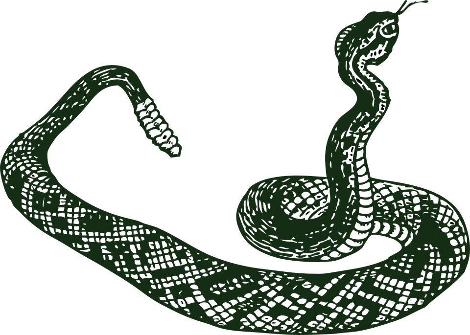 Free vector graphic: Rattle Snake, Serpent, Snake.