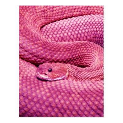 Pink Basilisk Rattlesnake Postcard.