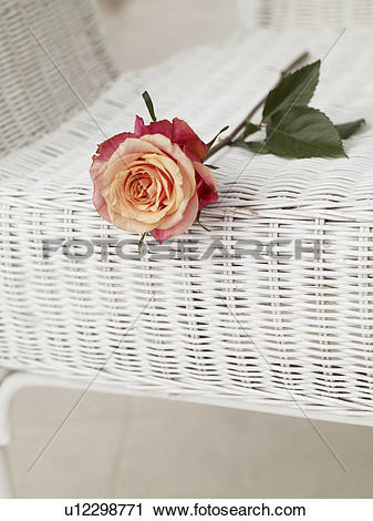 Stock Photography of Rose on a basket chair u12298771.