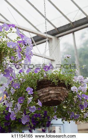Stock Image of Hanging basket in garden center k11154165.