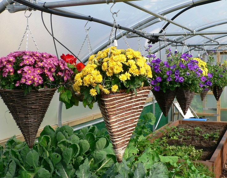 1000+ images about Bloomin' Baskets on Pinterest.