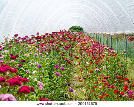 Greenhouse Flowers Stock Images, Royalty.