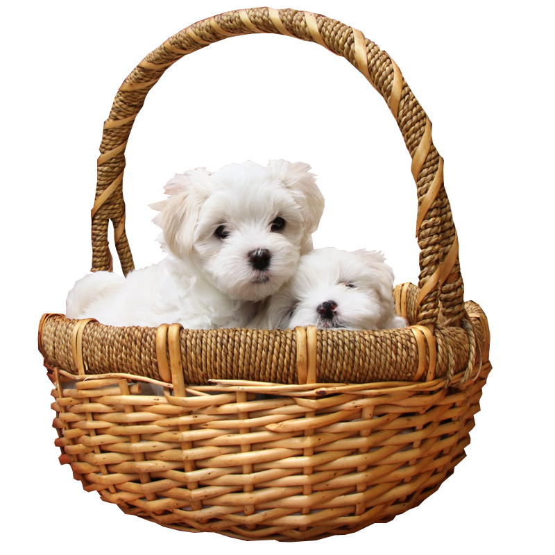 Puppies in Basket PNG Transparent Image Pet No background image.