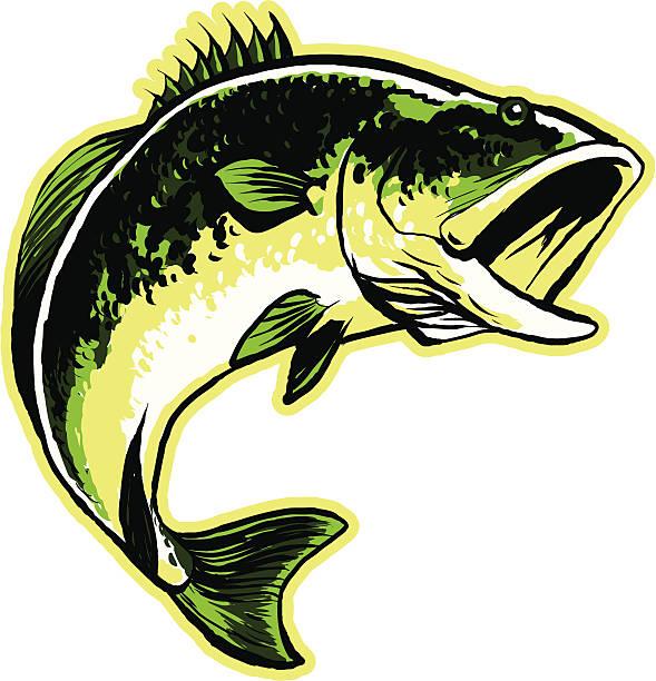 Best Largemouth Bass Illustrations, Royalty.