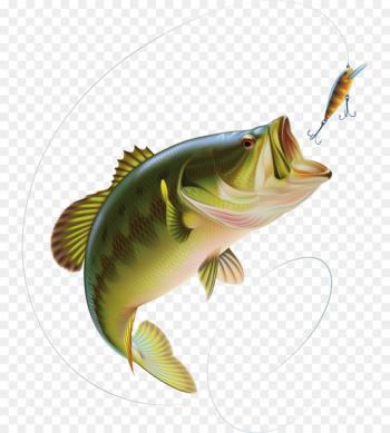 Fishing Free content Bass Clip art.