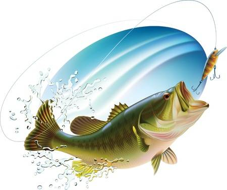 Bass Fish Clipart (94+ images in Collection) Page 2.
