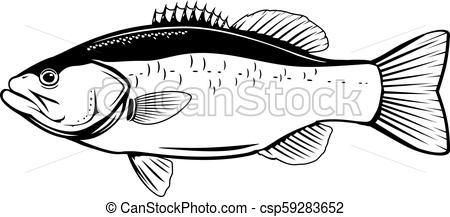 Largemouth Bass Fish.