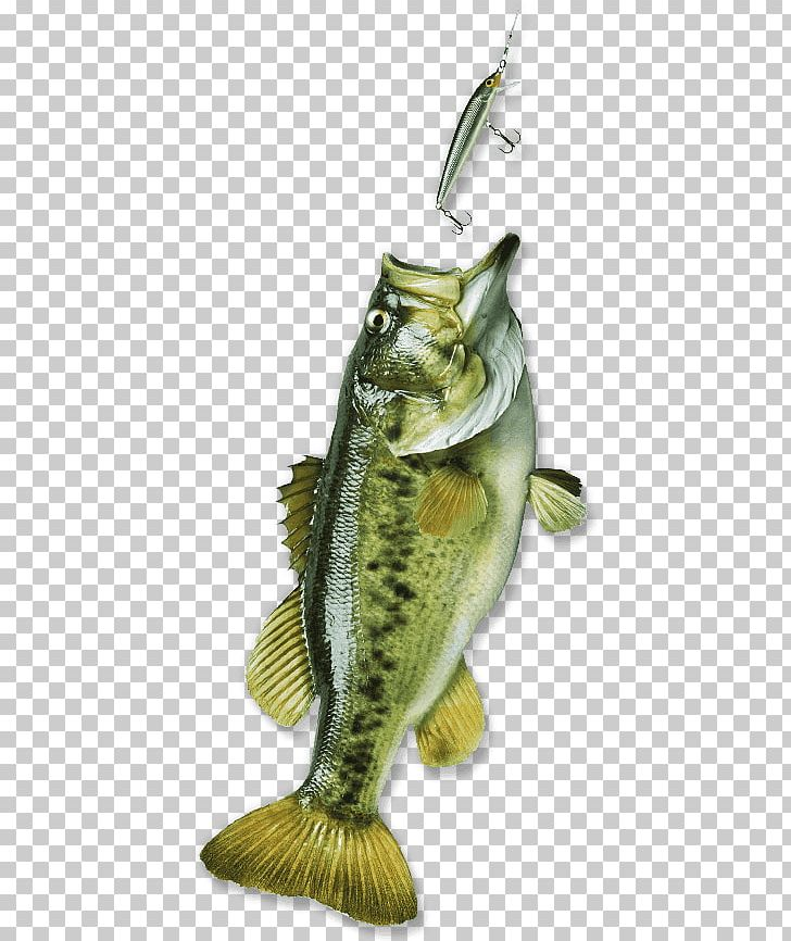 Bass Fishing Bass Fishing Fishing Rods Fishery PNG, Clipart, Angling.