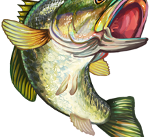 Fish,Bass,Fish,Illustration,Carp,Northern largemouth bass #4447397.
