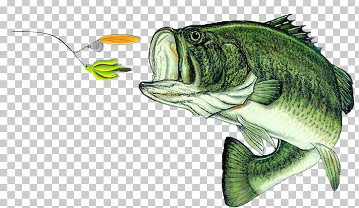 Bass Fishing Largemouth Bass Decal PNG, Clipart, Angling, Bait, Bass.