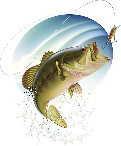 Best Bass Fishing Illustrations, Royalty.