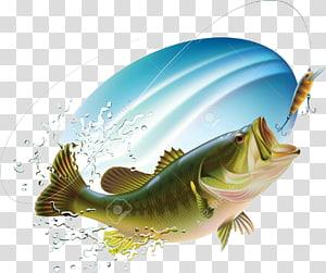 Largemouth bass Bass fishing Sunfishes, Blues Flyer transparent.