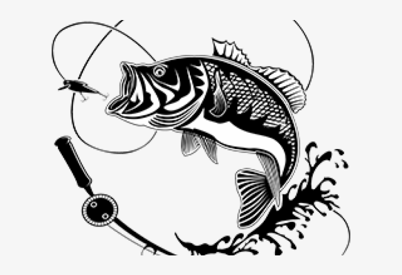 Carp Clipart Largemouth Bass.