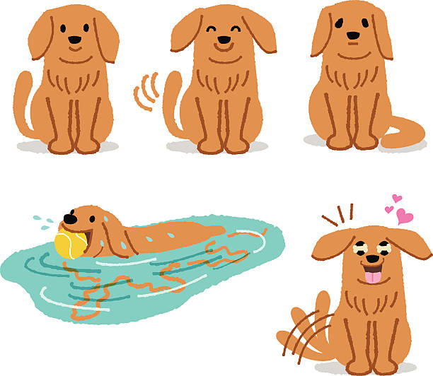 Dog Shaking Water Clip Art, Vector Images & Illustrations.