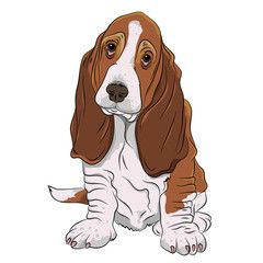 basset hound puppy realistic vector illustration isolated.