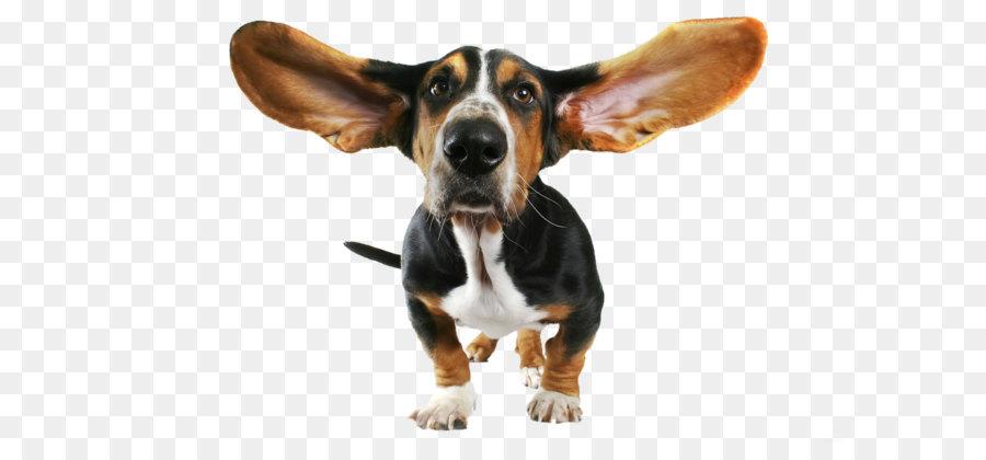 Cartoon Dog png download.