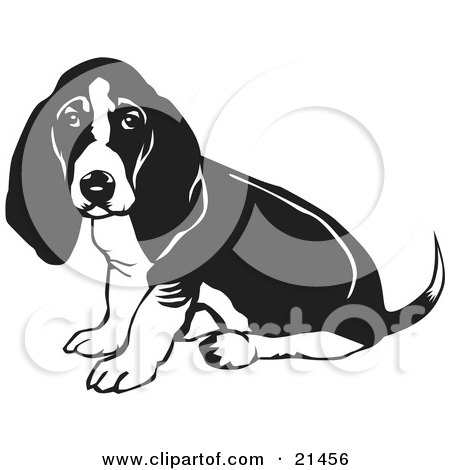 Clipart Illustration of a Basset Hound Dog With Sitting And Looking.