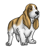 Download Basset Hound Free PNG photo images and clipart.