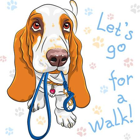 1,085 Basset Hound Stock Illustrations, Cliparts And Royalty Free.