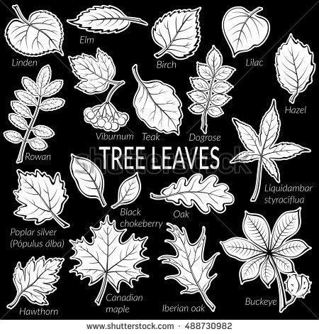 Teak Tree Stockfoto's, rechtenvrije afbeeldingen en vectoren.
