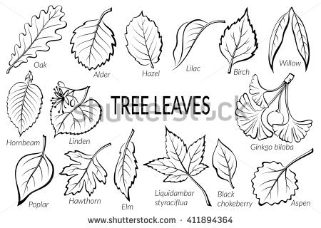 Hazel Wood Tree Stock Photos, Royalty.