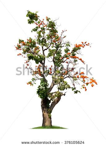 Teak Tree Stock Photos, Royalty.