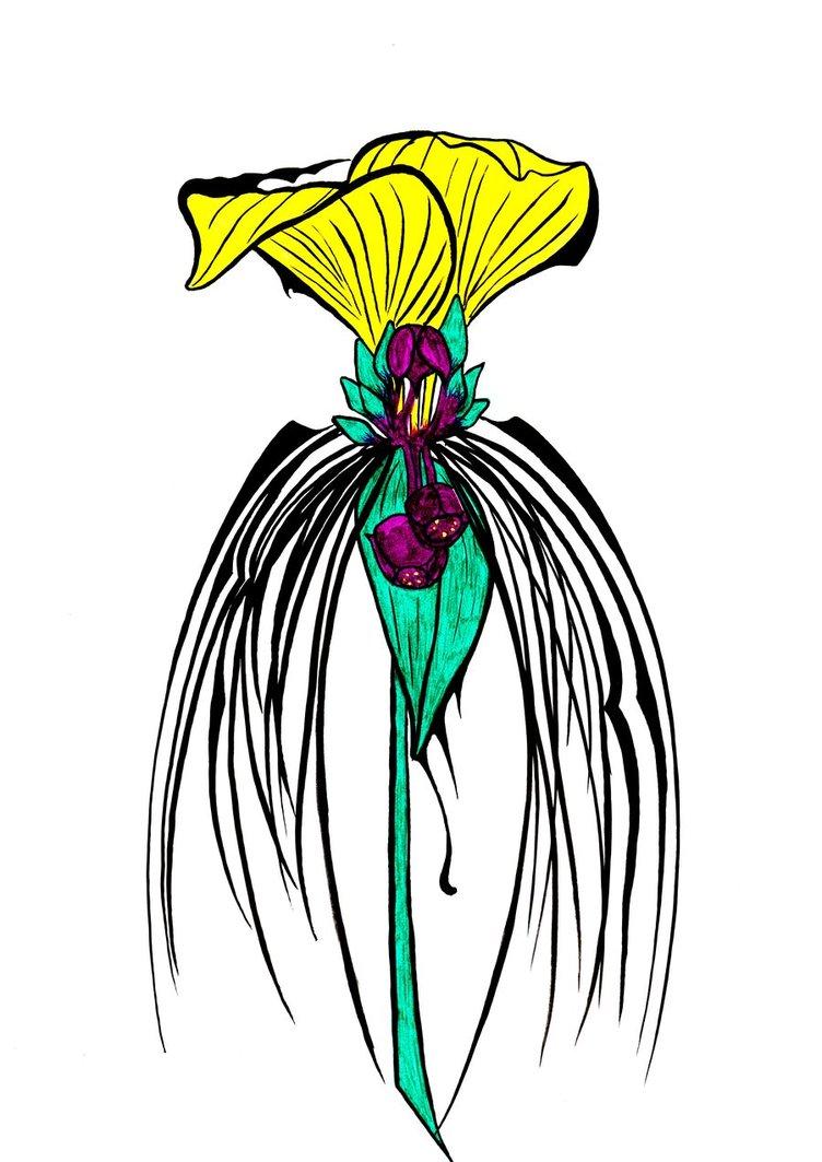 Black Bat Flower HD by RobCrichton on DeviantArt.