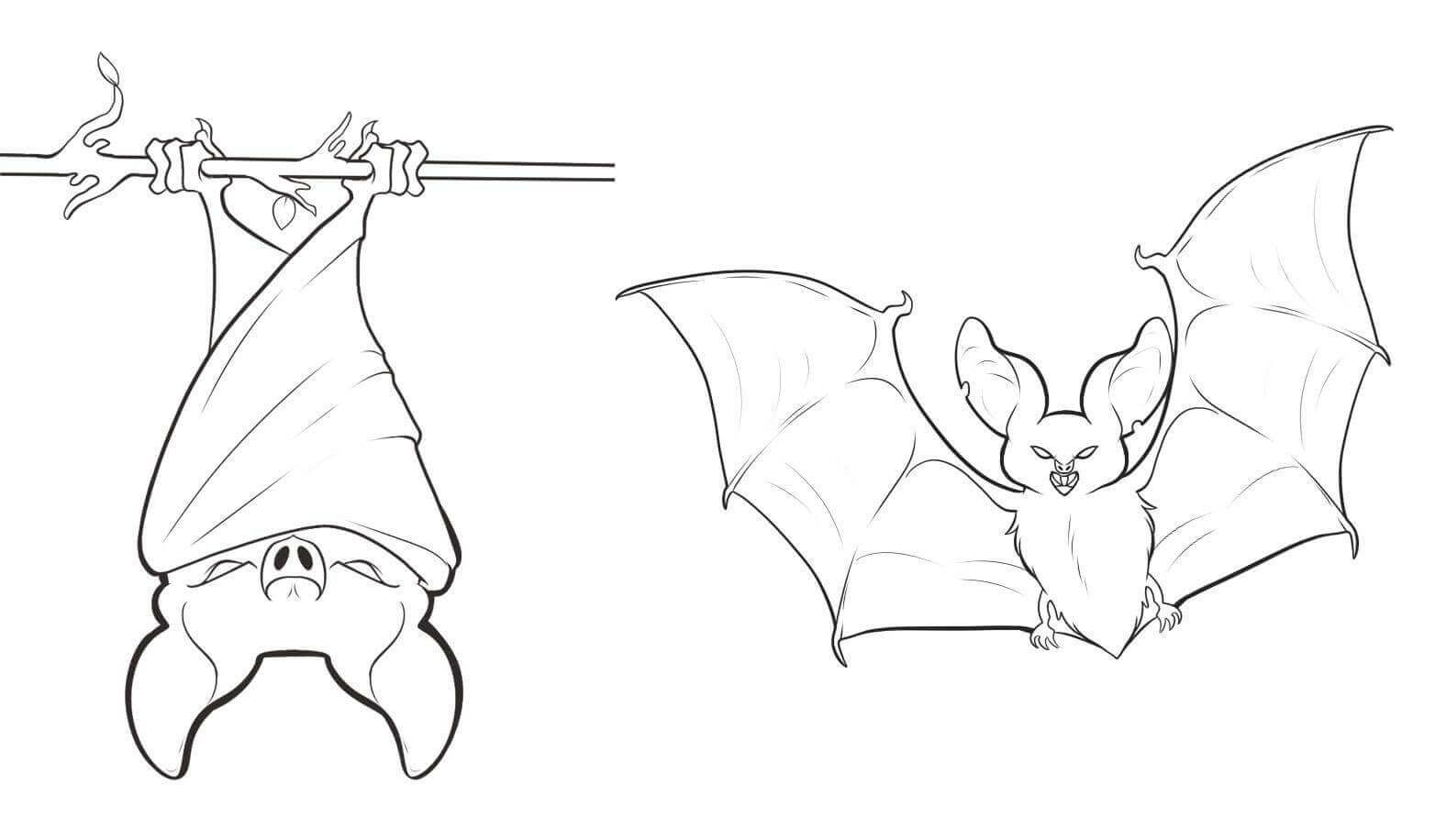 Bat Hanging Upside Down Coloring Page.
