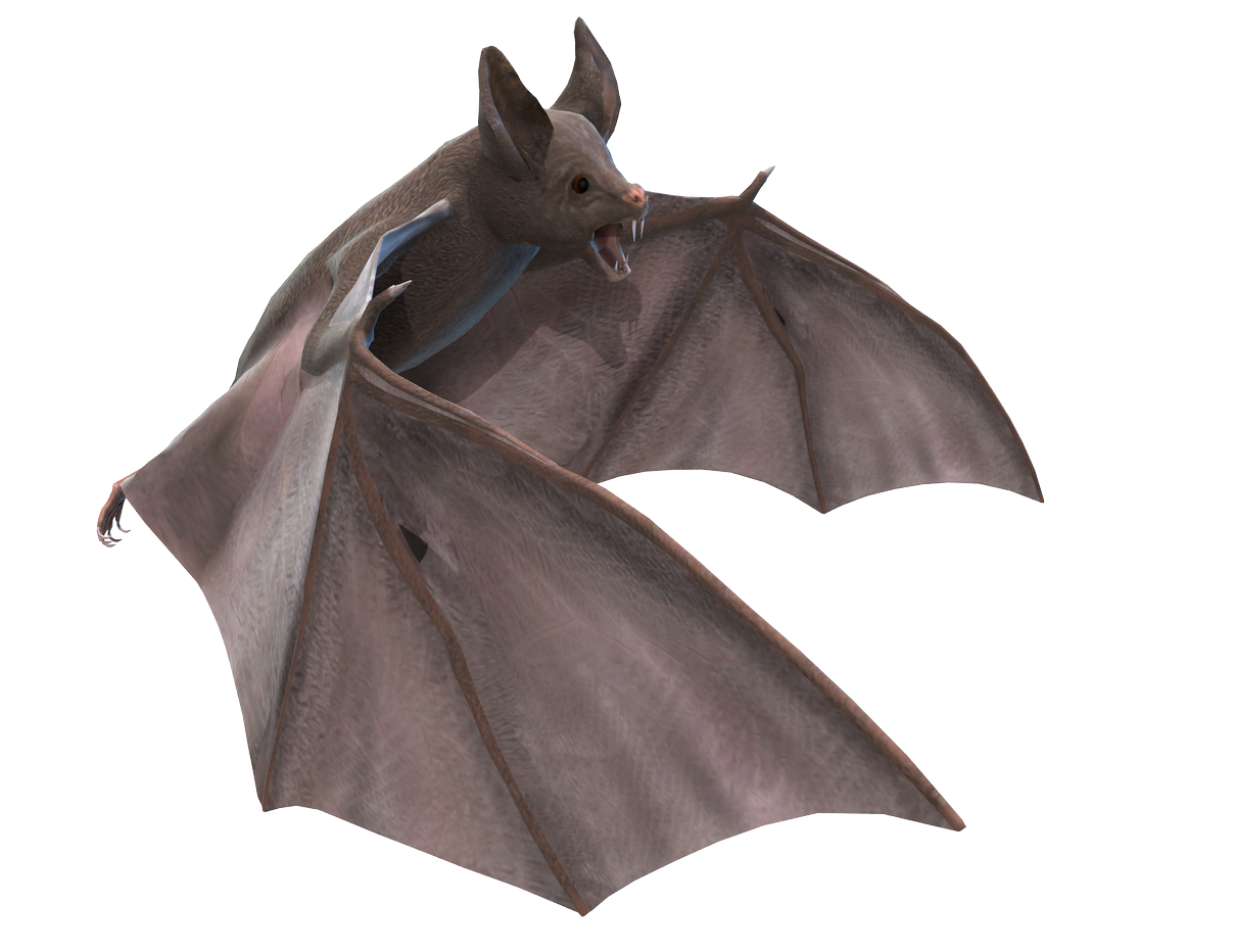 Bat PNG images free download.