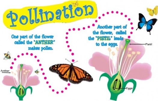 Pollination and Fertilization Facts for Kids.