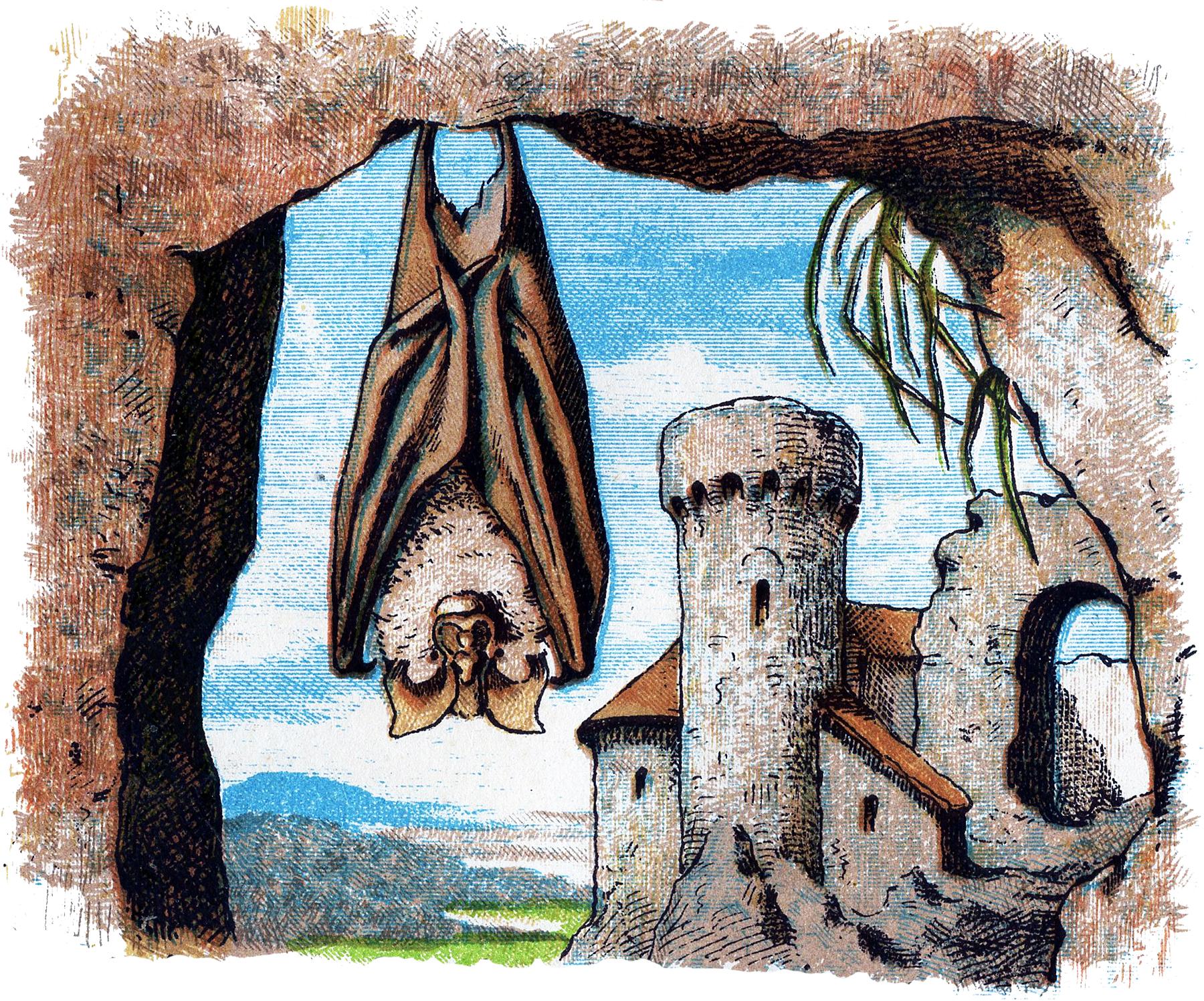 12 Bat Images.
