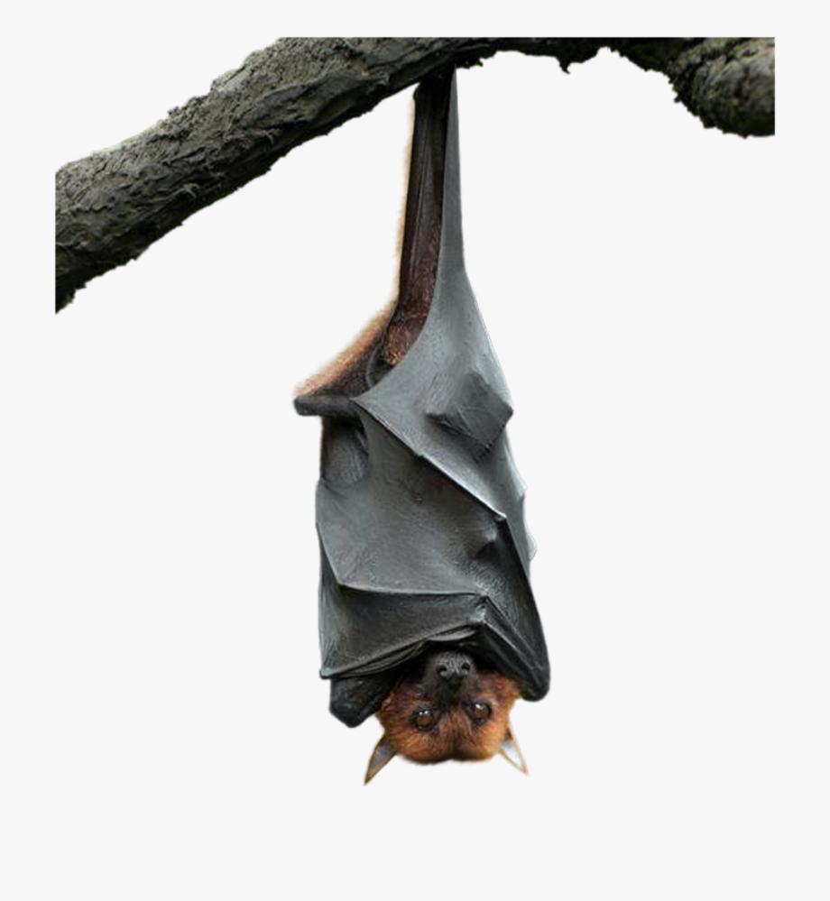 bat #upsidedown #halloween #hanging #freetoedit.