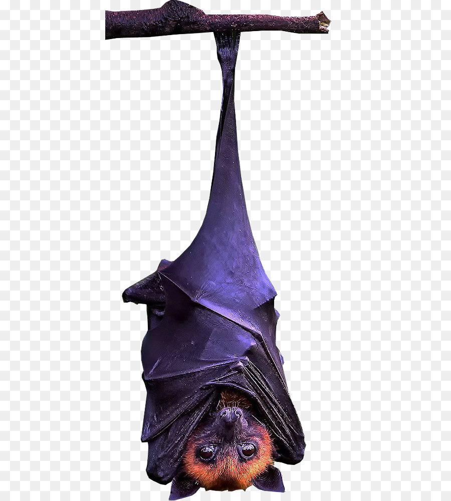 Free Hanging Bat Silhouette, Download Free Clip Art, Free.