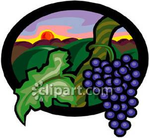 In a Vineyard.