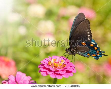 Green Swallowtail Stock Photos, Royalty.