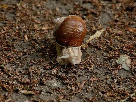 토지, 달팽이.