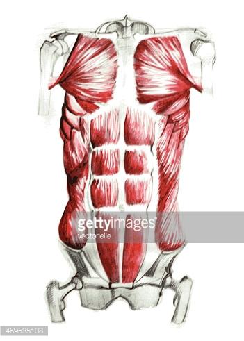 Bauchmuskeln stock.