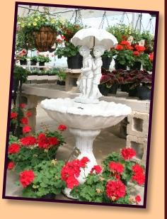 Flower & Plants.