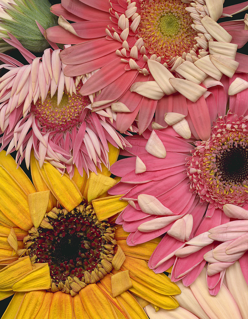 Graphic Flower And Plant Images.