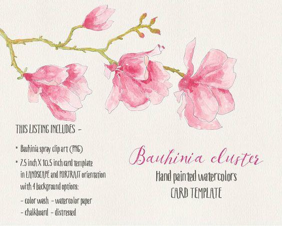 Clipart fleurs aquarelle : coin et vaporisateurs droites ; nuances.