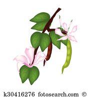 Bauhinia Clipart Vector Graphics. 8 bauhinia EPS clip art vector.