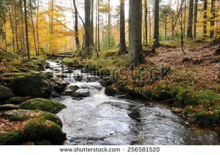 Bavarian Forest Stock Images, Royalty.