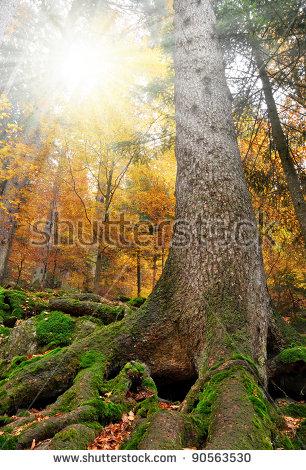 Bavarian forest clipart #6