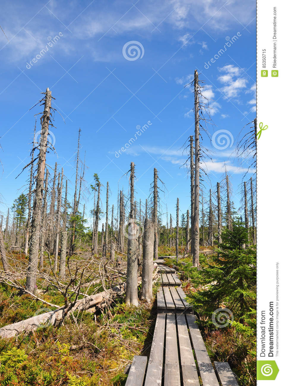 Dead Wood In National Park Bavarian Forest Stock Photo.