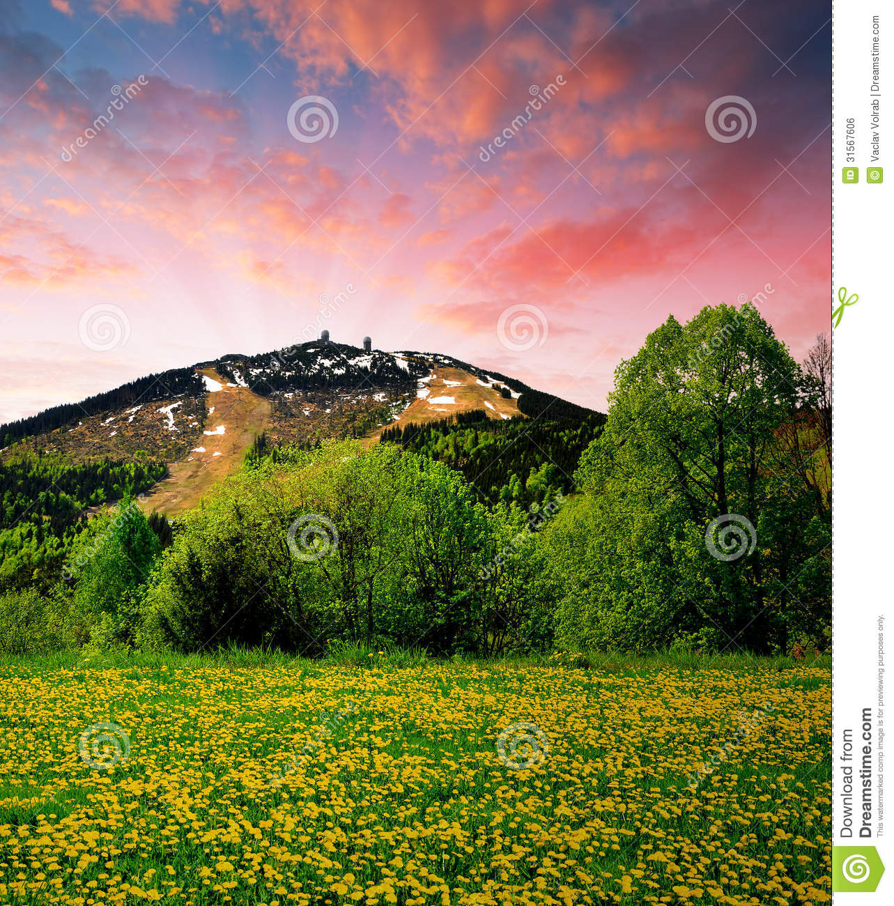 Bavarian Forest Royalty Free Stock Image.