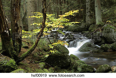 Stock Photograph of Germany, Bavarian forest, mountain stream.