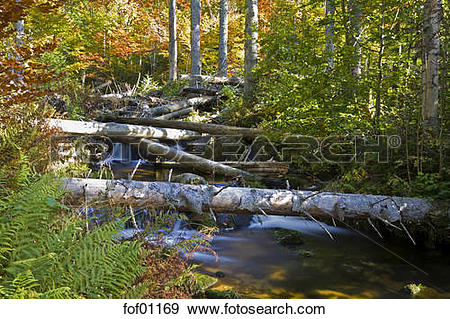 Stock Photograph of Germany, Bavarian Forest, Brook, fallen trees.